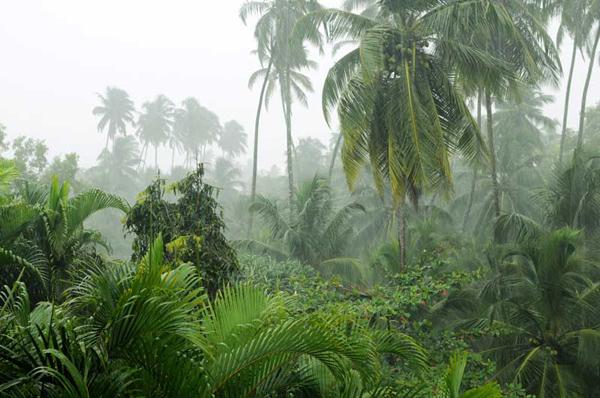 Rain_India_Rowena_Budkulo_03