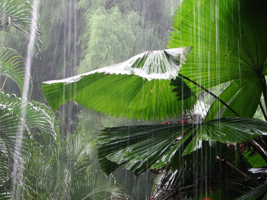 Rain_India_Rowena_Budkulo_04