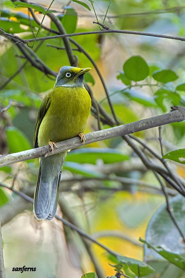 Budkulo_Kudla_Mangaluru_Birds (2)